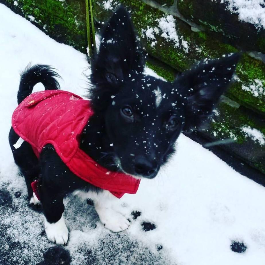 Watson Snow